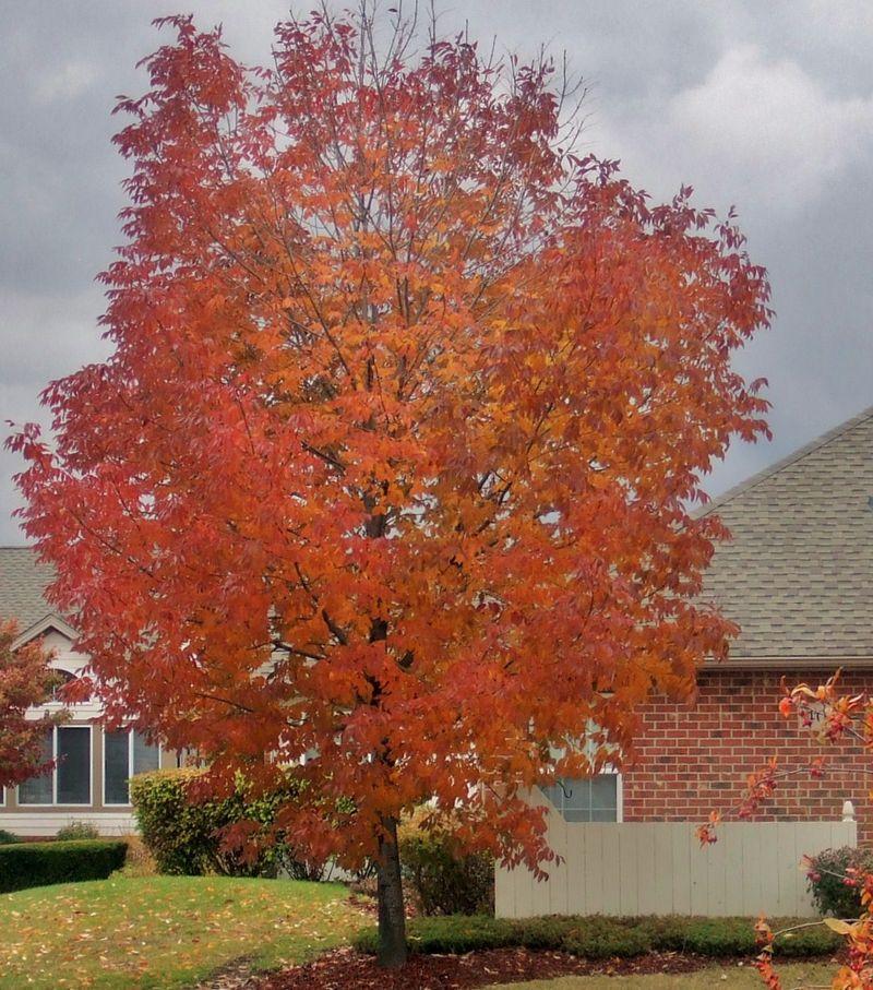 A TREE GUSSIE 2009