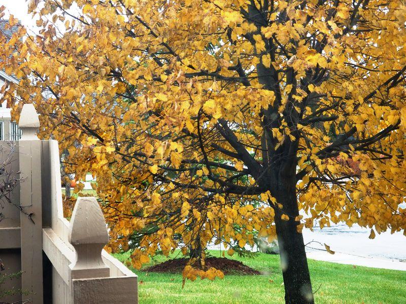 A TREE FALL 2009