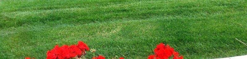 GREEN GRASS 2010