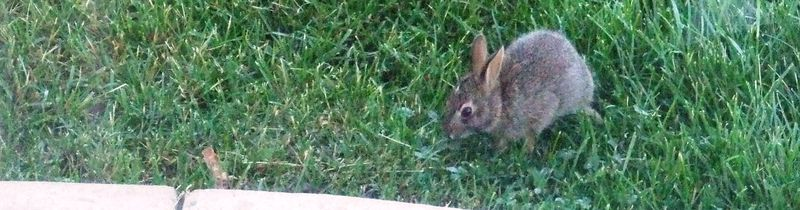 BUNNY IN THE GRASS 2010
