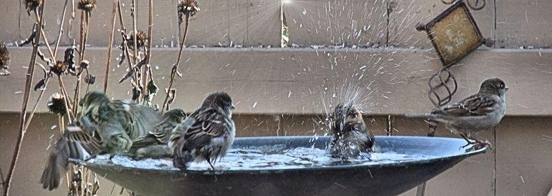 BIRD BATH 6 100410