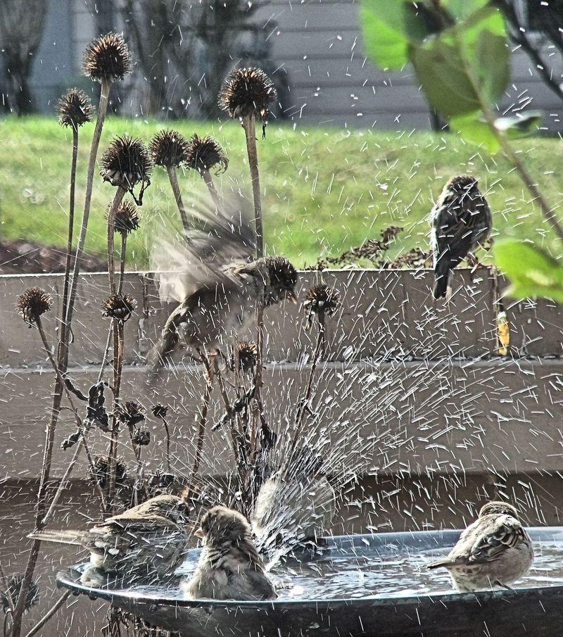 BIRDS BATHTUB 32 2010