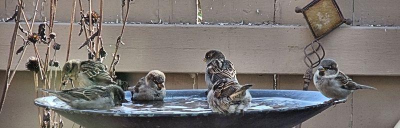 BIRD BATH 5 100410