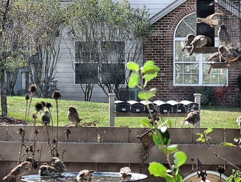 BIRDS BATHTUB 1 2010
