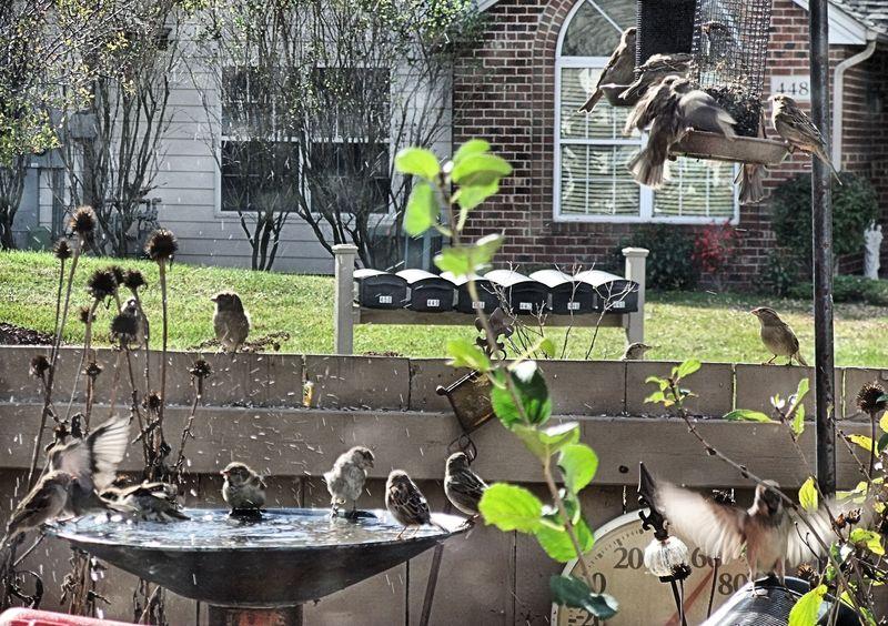 BIRDS BATHTUB 3 2010