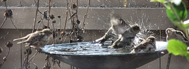 BIRDS BATHTUB 28 2010