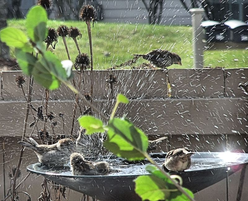 BIRDS BATHTUB 31 2010