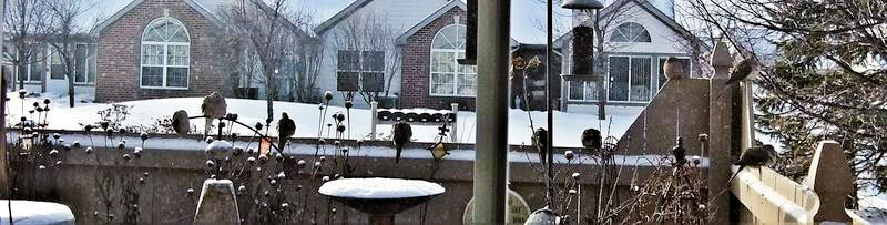 WINTER MOURNING DOVES 9 ON FENCE EDITED 2010