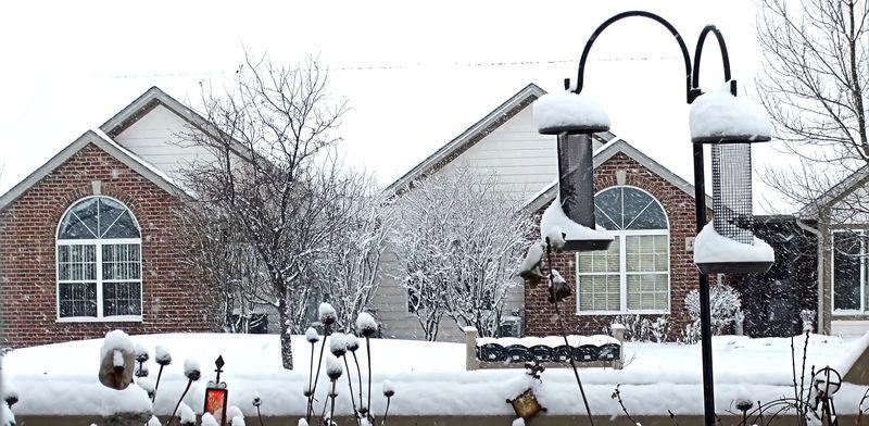 BIRD FEEDER WINTER SNOW 2010