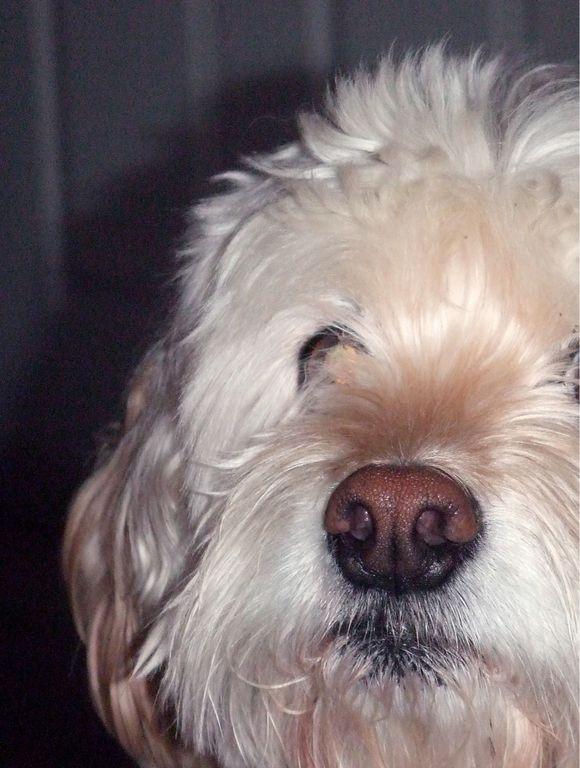 My Dog Knows I'm Sick (Cancer)