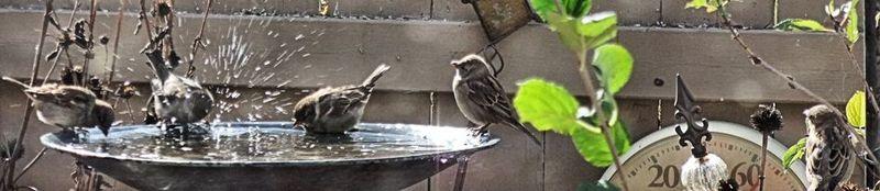 BIRD BATHTUB 14 2010 banner